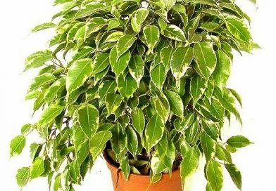 Rastliny pomôžu ochrániť interiér pred teplom