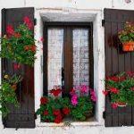 Kvety pre vaše okná