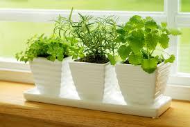 Pestovanie byliniek doma