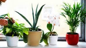 Dosiahnite v domácnosti prirodzene čistý vzduch