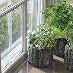 Tipy na pestovanie bylín v interiéri