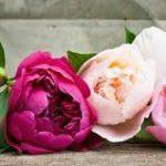 Kvetinové vône pre váš domov